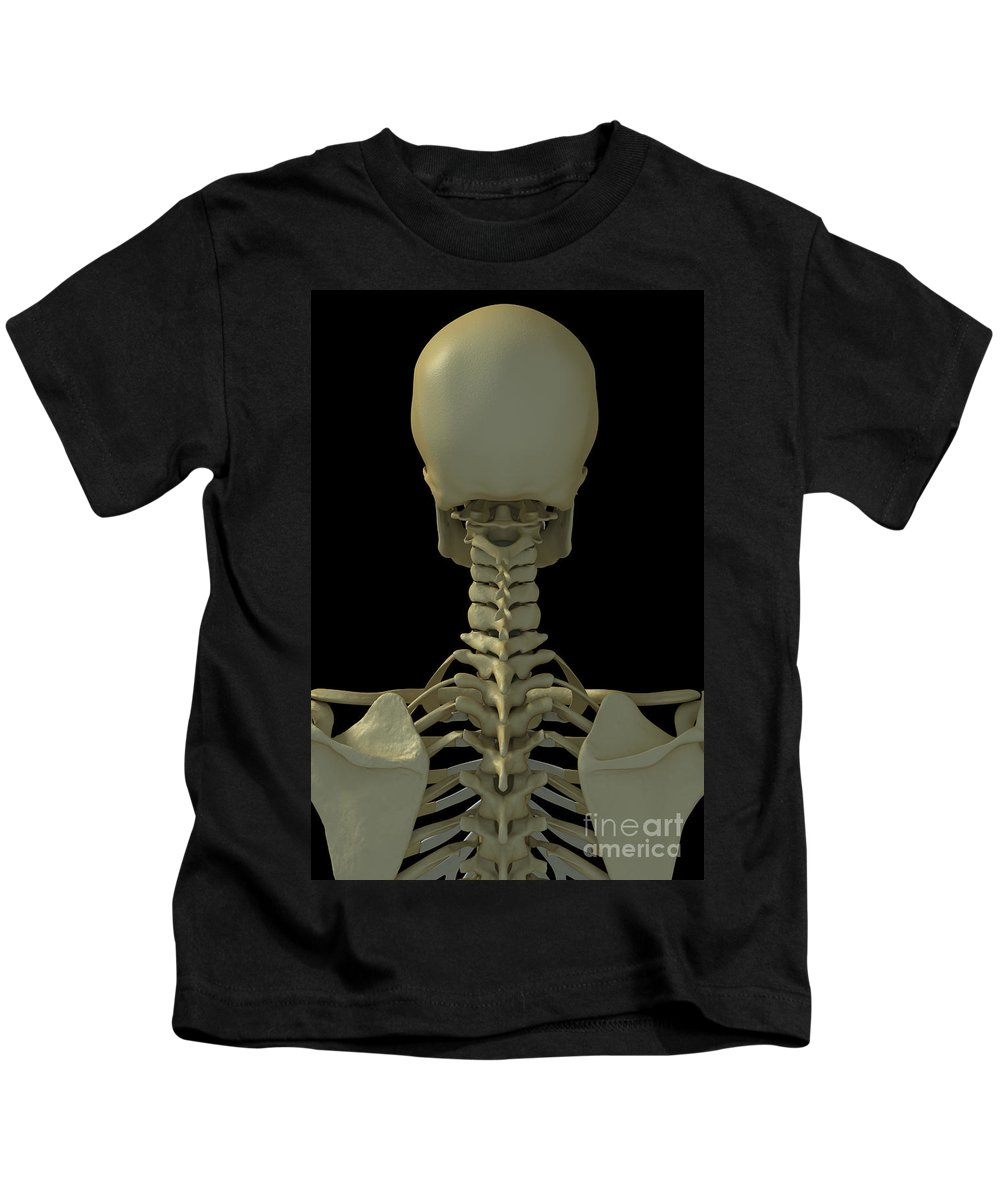 Thoracic Vertebrae Kids T-Shirt featuring the photograph Bones Of The Head And Neck by Science Picture Co