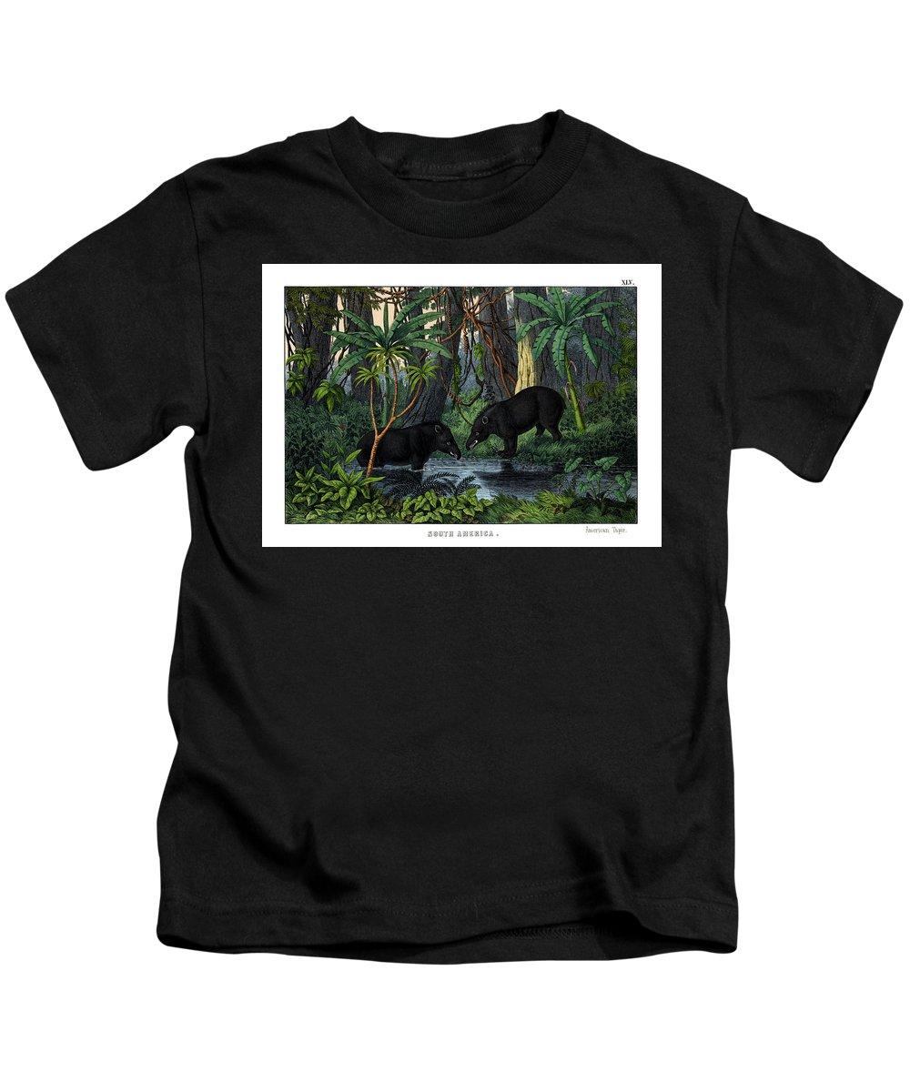Wild Animals Kids T-Shirt featuring the drawing American Tapir by Splendid Art Prints