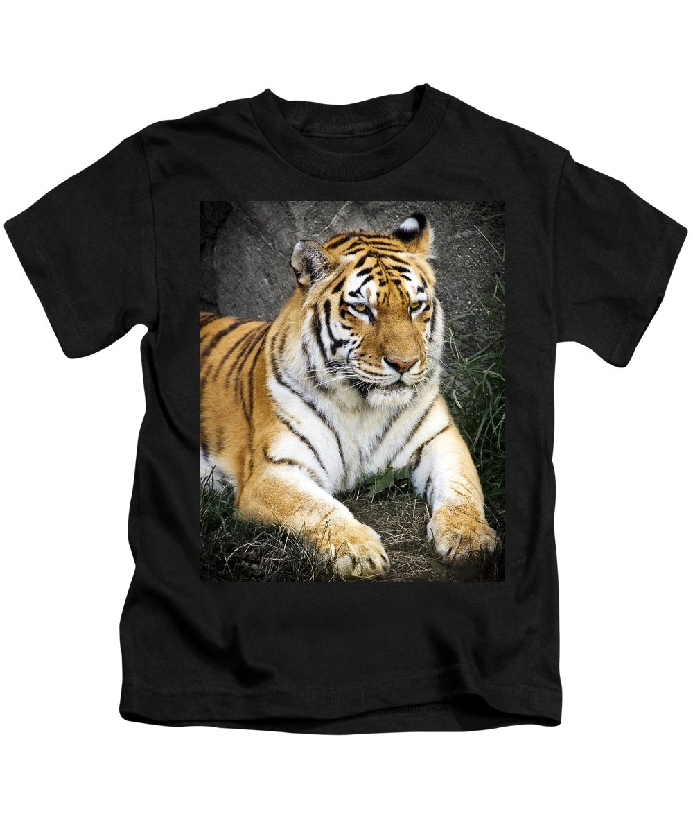 3scape Photos Kids T-Shirt featuring the photograph Amur Tiger by Adam Romanowicz