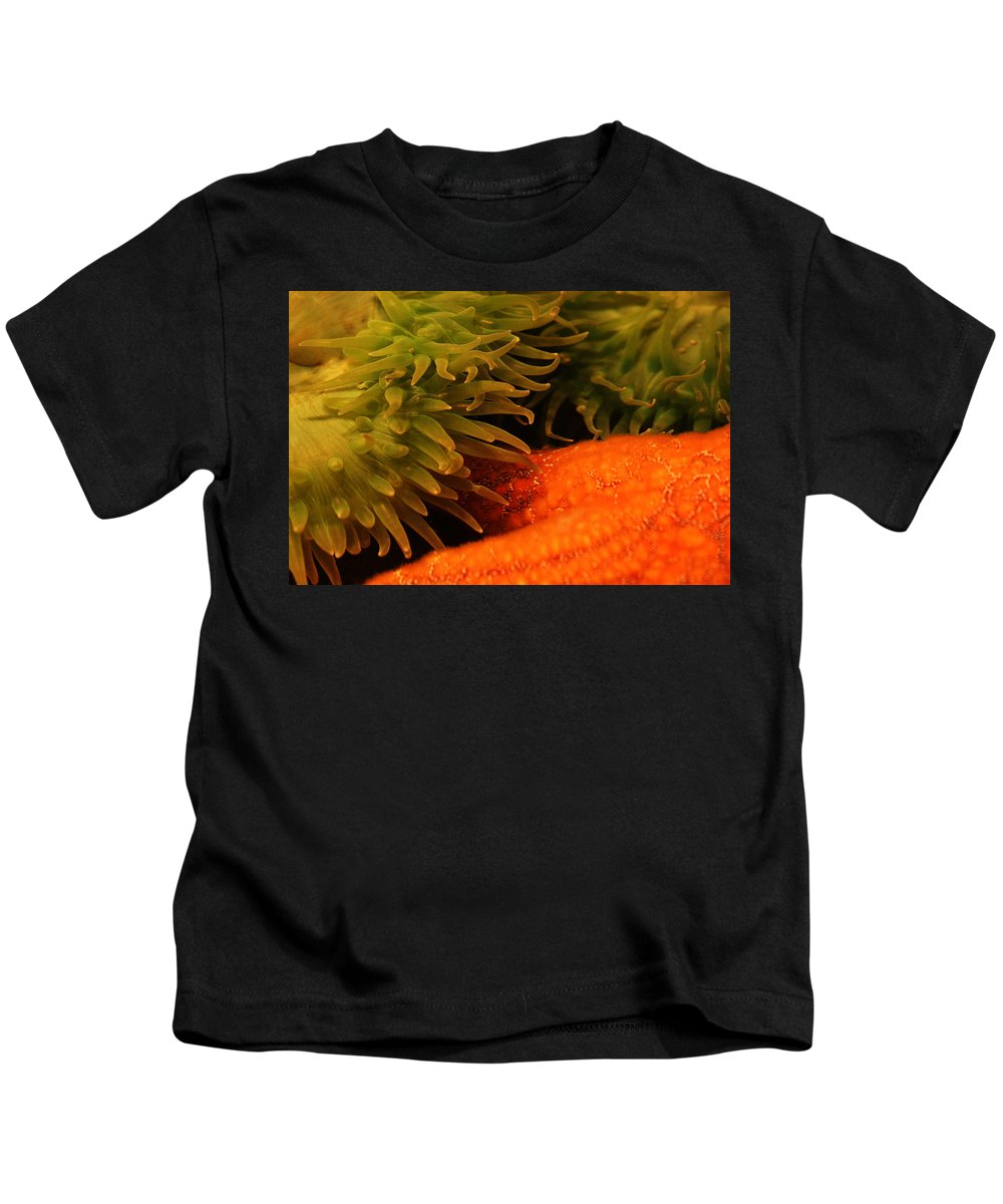 Anenome Kids T-Shirt featuring the photograph Anenome And Starfish by Robert Woodward