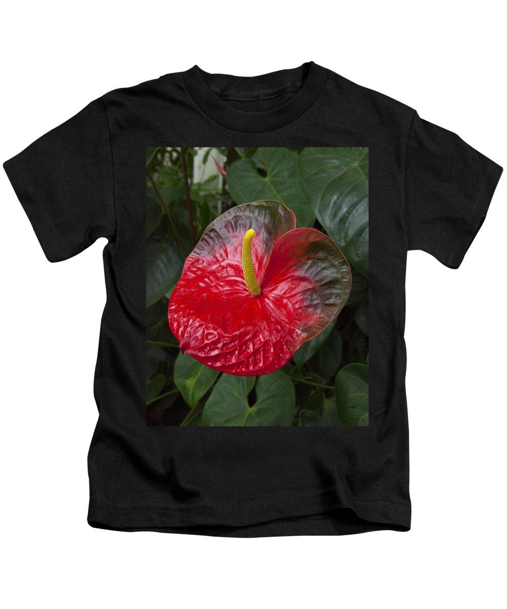 Anthurium Kids T-Shirt featuring the photograph Anthurium Flamingo Flower Beauty Queen Fine Art Photography Print by Jerry Cowart