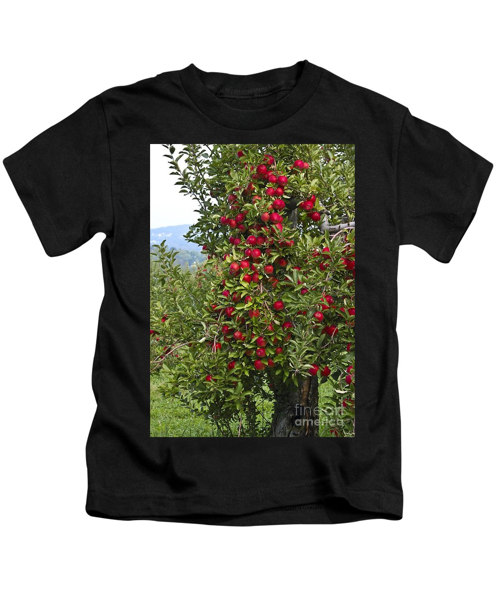 Apple Kids T-Shirt featuring the photograph Apple Tree by Anthony Sacco
