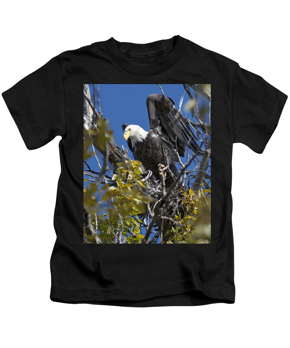 Bald Eagle Kids T-Shirt featuring the photograph Bald Eagle On Nest Near The Oxbow by Gary Langley