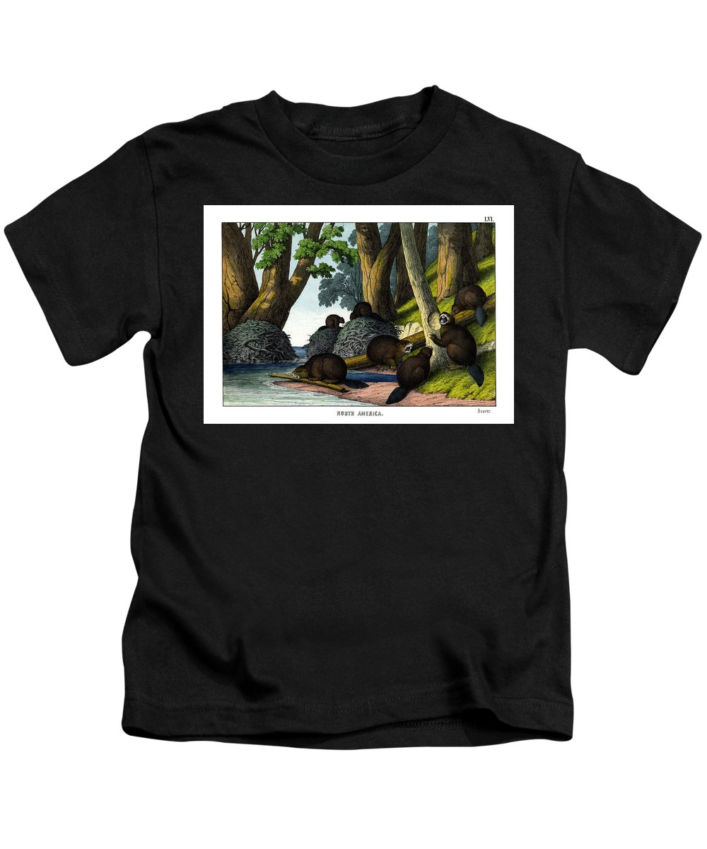 Wild Animals Kids T-Shirt featuring the drawing Beaver by Splendid Art Prints