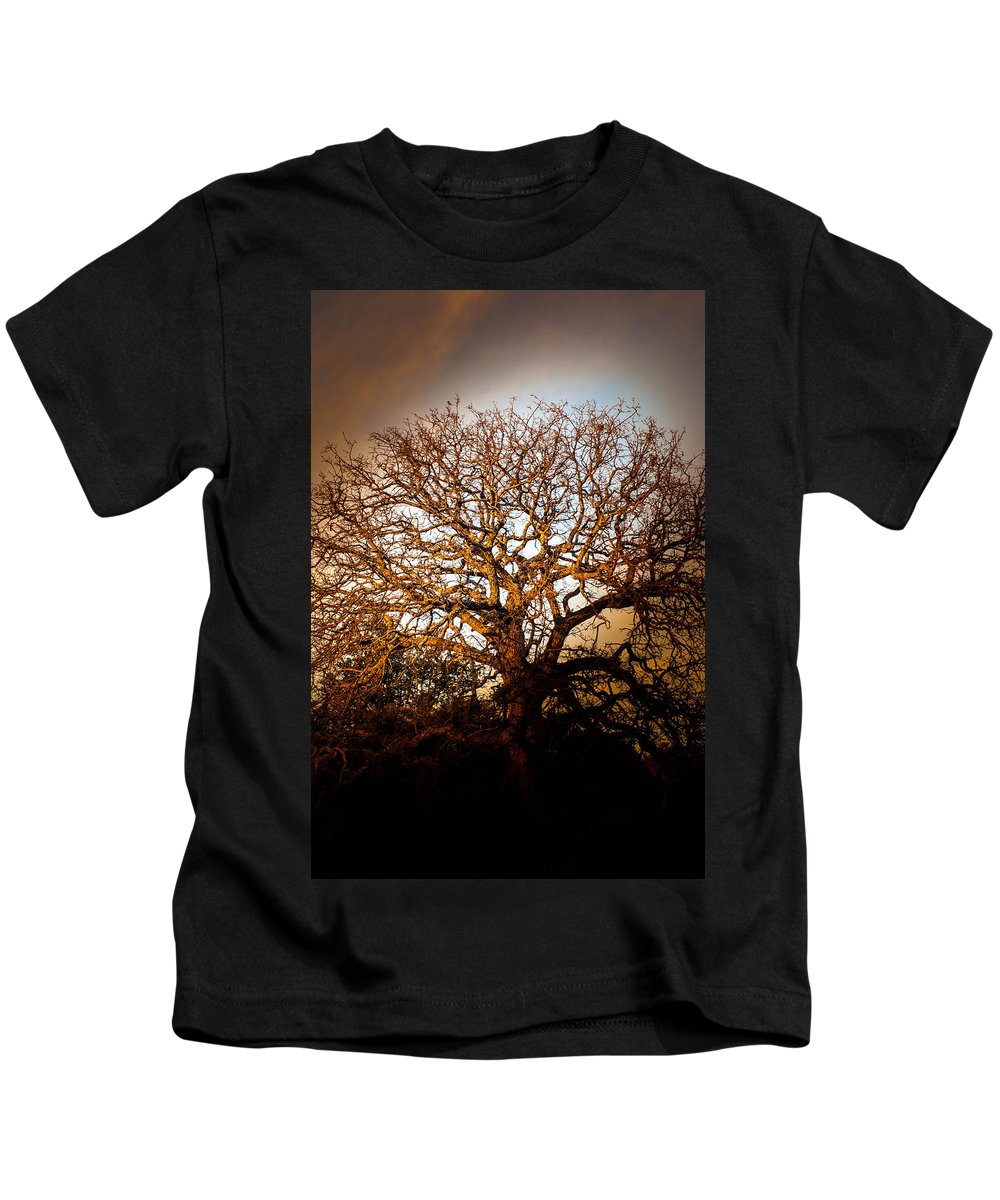 Tree Kids T-Shirt featuring the photograph Big Tree by Ryan Dove