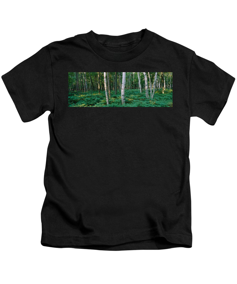 Photography Kids T-Shirt featuring the photograph Birch Trees In A Forest by Panoramic Images