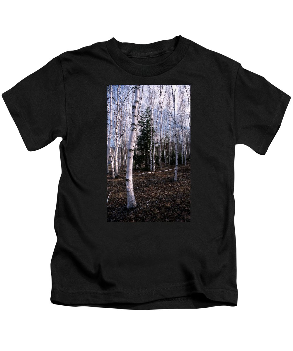 Tree Kids T-Shirt featuring the photograph Birches by Skip Willits