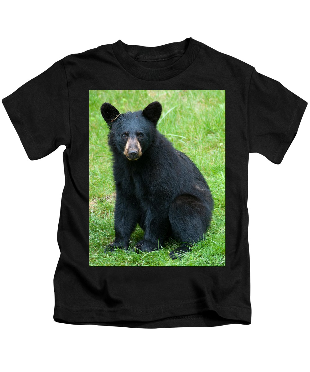 Black Bear Kids T-Shirt featuring the photograph Black Bear Cub by Brenda Jacobs