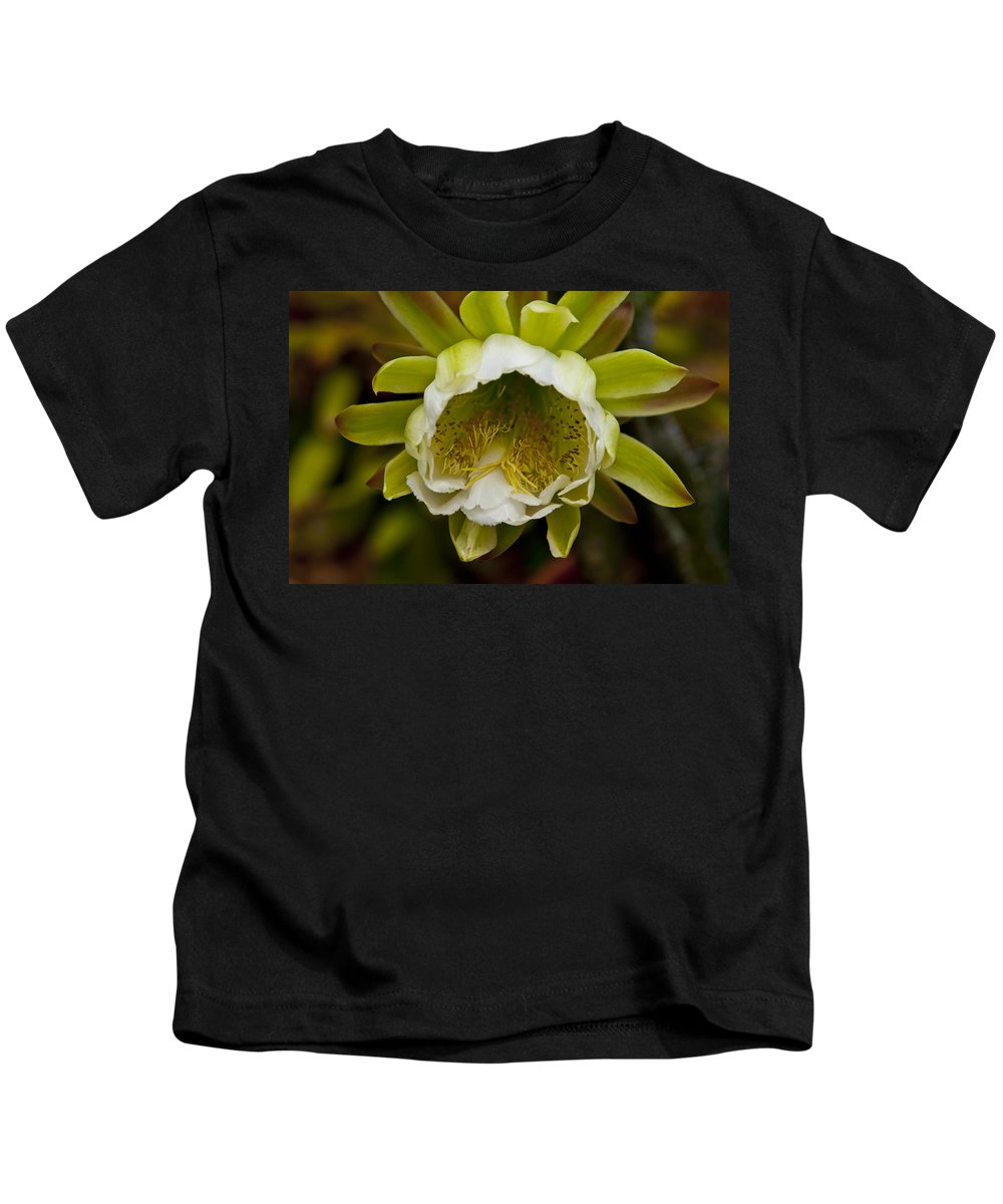 Cactus Kids T-Shirt featuring the photograph Cactus Flower 1 by Sharon Cummings