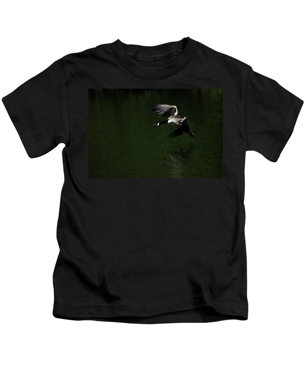 Canada Goose Kids T-Shirt featuring the photograph Canada Goose In Flight by Karol Livote