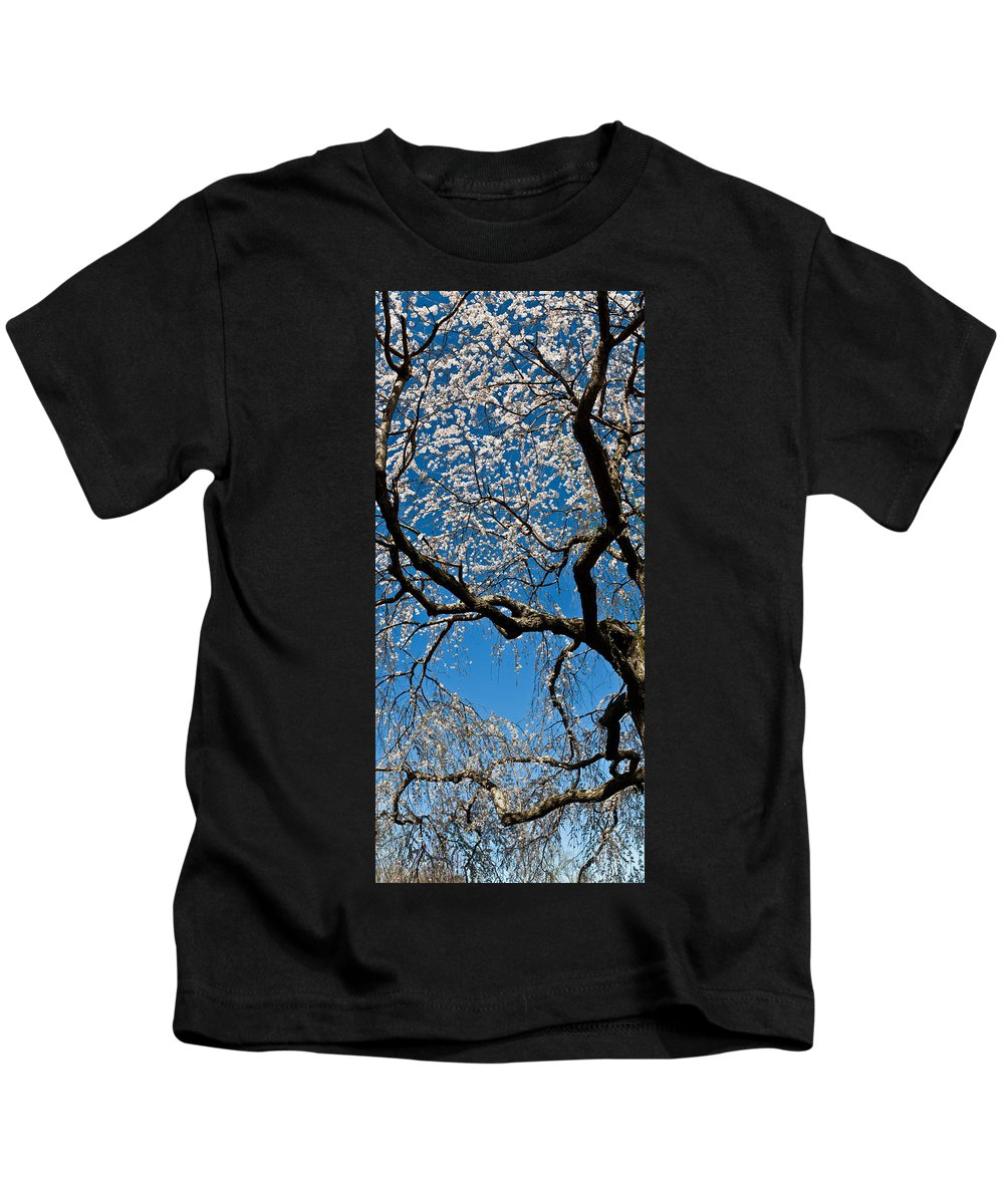 Brookside Garden Kids T-Shirt featuring the photograph Cherry Blossoms And Sky by Richard Nowitz