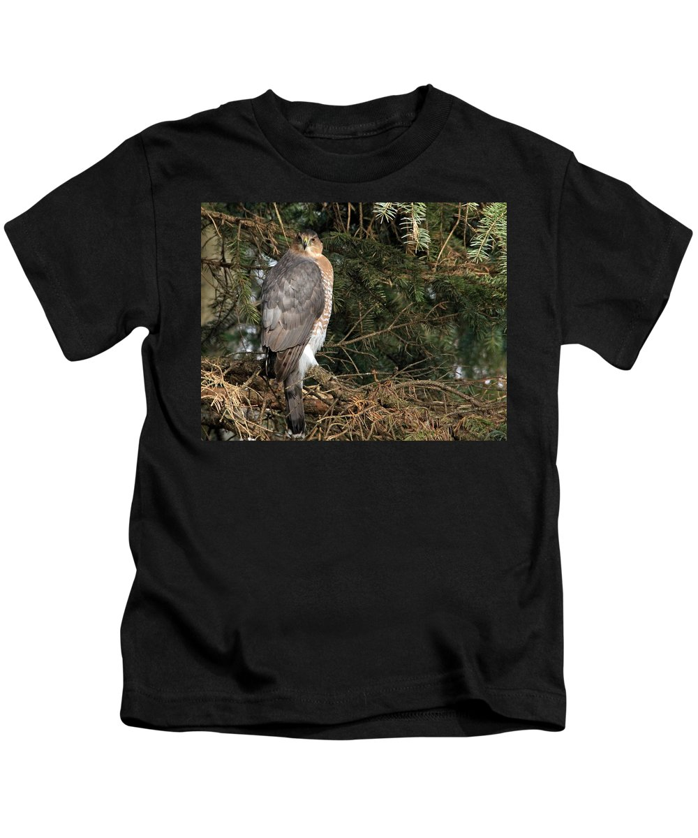 Coopers Hawk Kids T-Shirt featuring the photograph Coopers Hawk In Predator Mode by Debbie Oppermann
