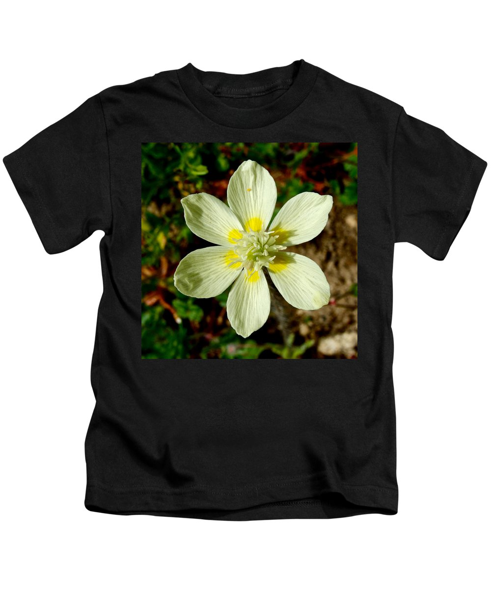 Cream Cups Kids T-Shirt featuring the photograph Cream Cup In Park Sierra-ca by Ruth Hager