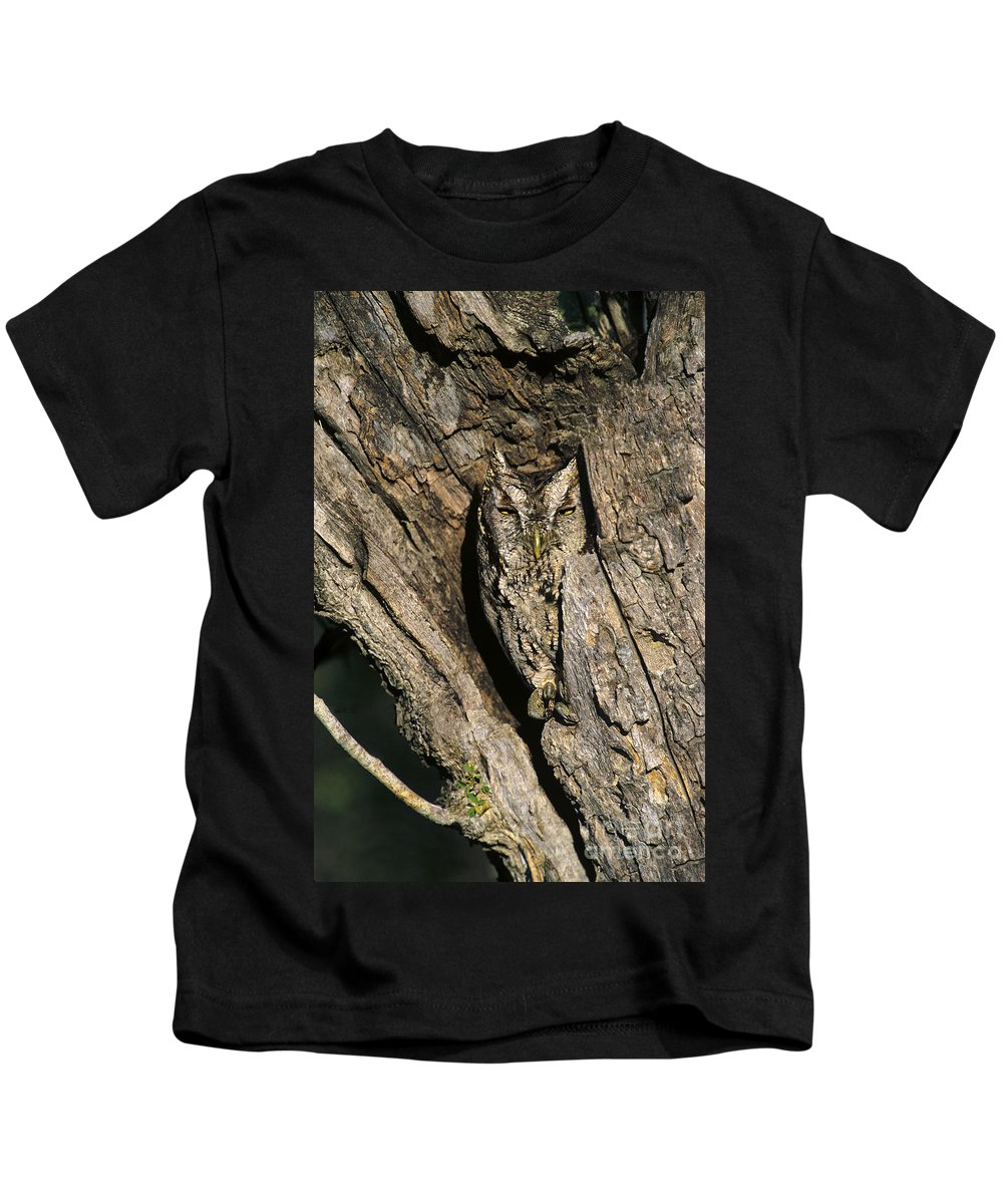 Dave Welling Kids T-Shirt featuring the photograph Eastern Screech-owl Otis Asio Wild Texas by Dave Welling