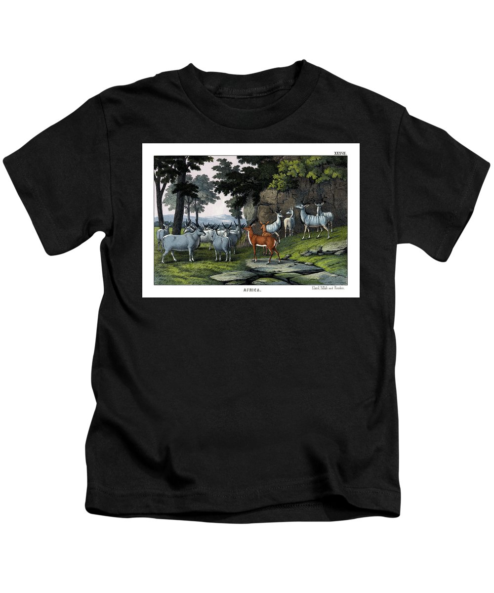 Wild Animals Kids T-Shirt featuring the drawing Eland Pallah Koodoo by Splendid Art Prints