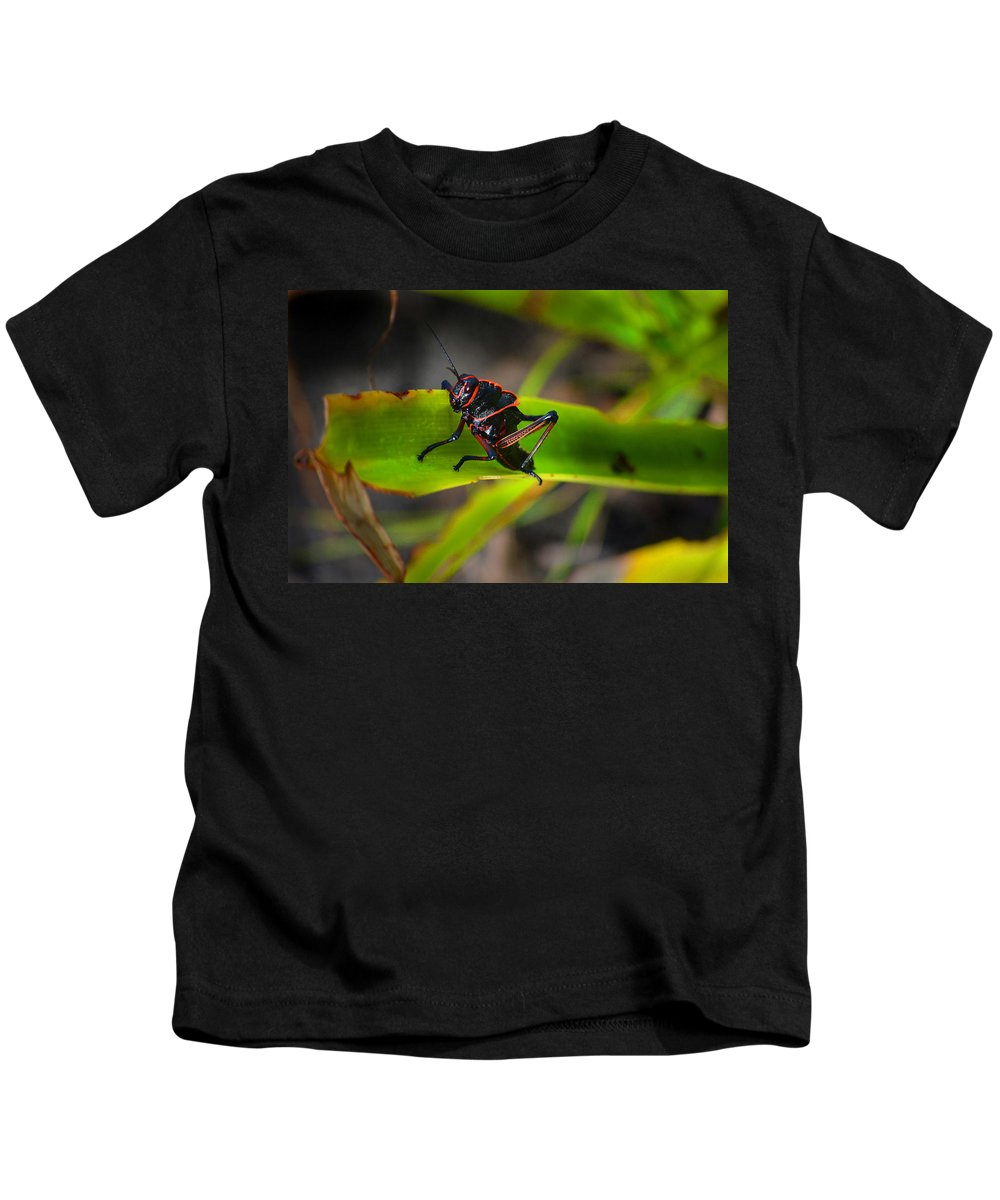 Grasshopper Kids T-Shirt featuring the photograph Elegant Sylvan Katydid by Gary Keesler