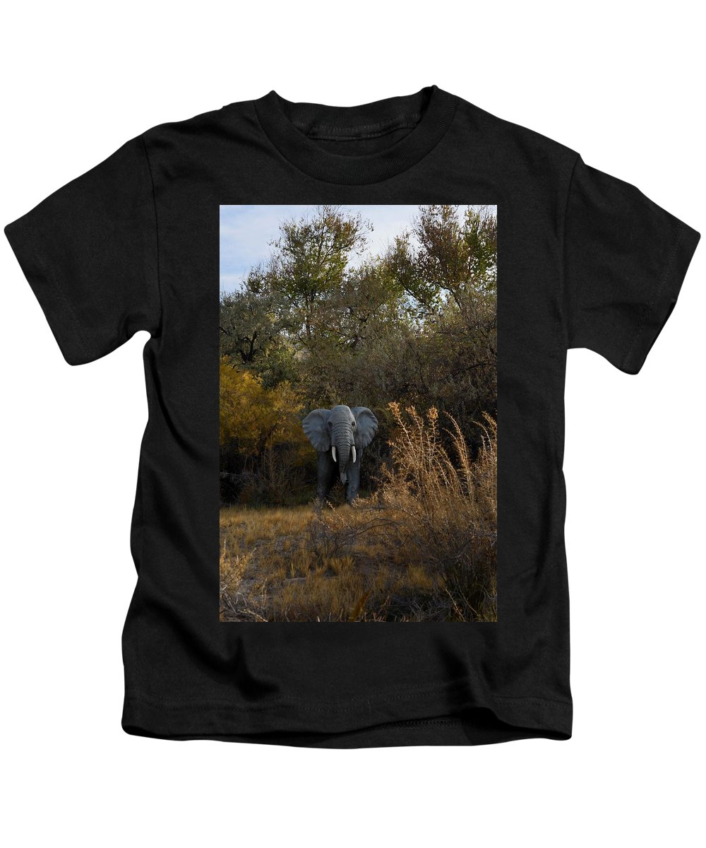 Melba Kids T-Shirt featuring the photograph Elephant Trail by Image Takers Photography LLC - Carol Haddon