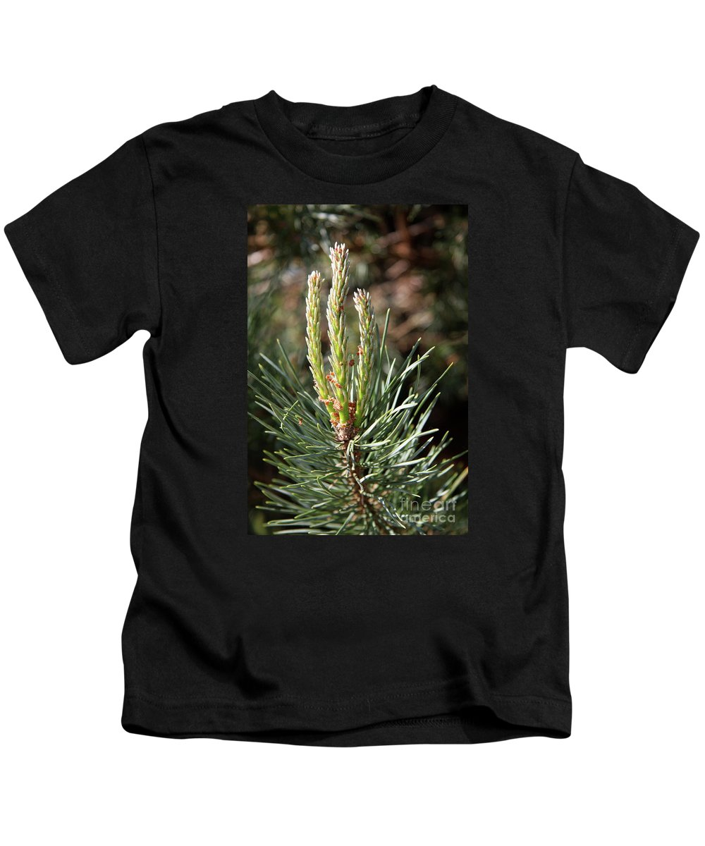 Pine Kids T-Shirt featuring the photograph Fresh Pine Sprouts by Christiane Schulze Art And Photography