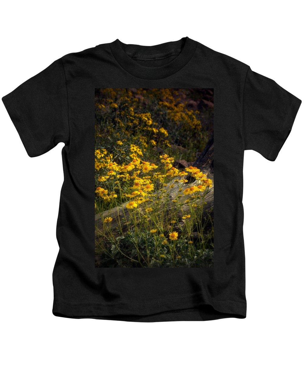 Yellow Brittlebush Kids T-Shirt featuring the photograph Golden Spring Flowers by Saija Lehtonen