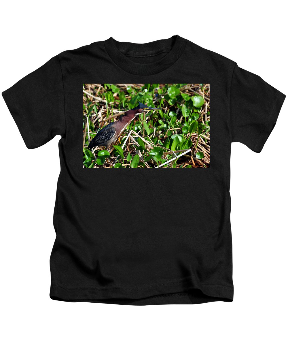Green Heron Kids T-Shirt featuring the photograph Good Old Dollar Weed by Davids Digits