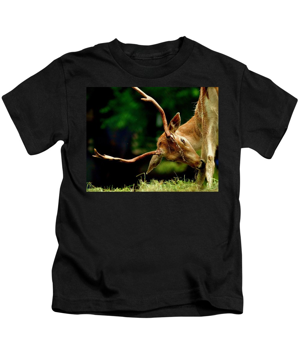 Deer Kids T-Shirt featuring the photograph Gotta Itch by Patricia Quandel
