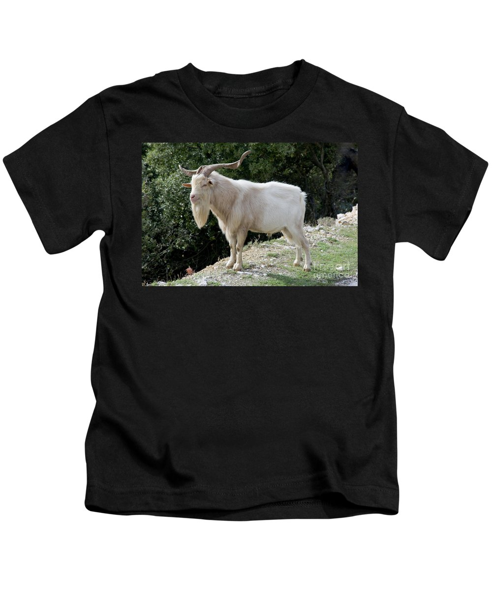 Gorges De L'ardèche France Gorge Canyon Canyons Mountain Goat Goats Animal Animals Creature Creatures Nature Horn Long Horns Kids T-Shirt featuring the photograph Gramps by Bob Phillips