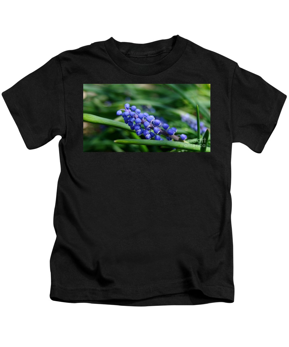 Grape Hyacinth Blooms Kids T-Shirt featuring the photograph Grape Hyacinth by Kitrina Arbuckle