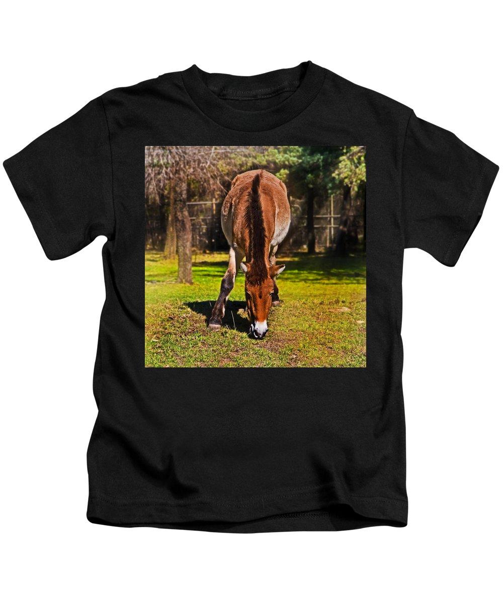 #przewalski's Horse Kids T-Shirt featuring the photograph Grazing With An Attitude by Miroslava Jurcik