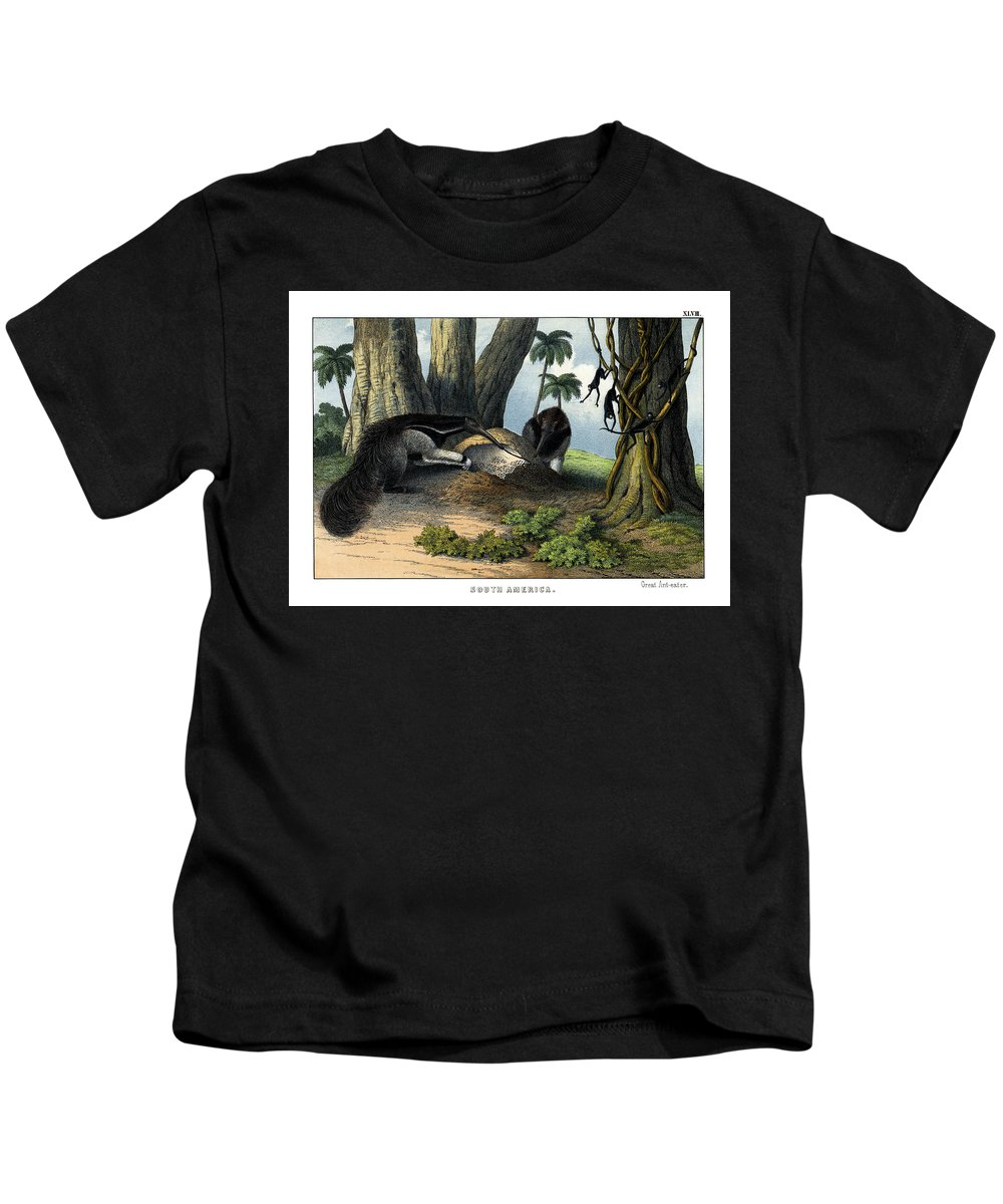Wild Animals Kids T-Shirt featuring the drawing Great Anteater by Splendid Art Prints