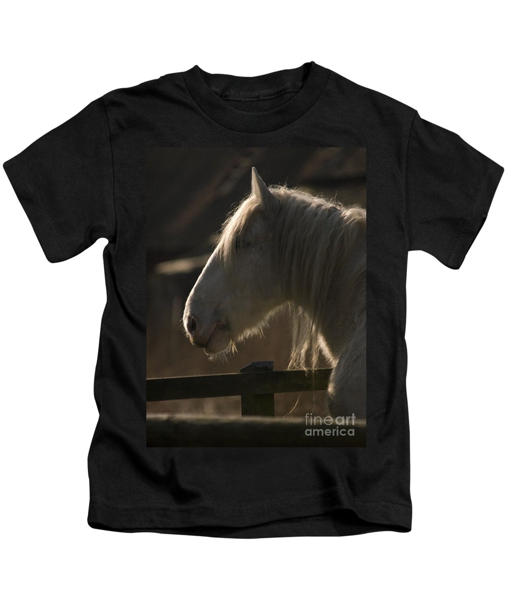 Horse Kids T-Shirt featuring the photograph Grey Shire Horse by Angel Ciesniarska