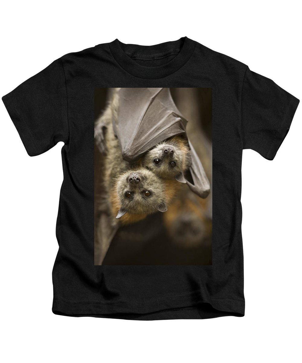 Bats Kids T-Shirt featuring the photograph Hang In There by Mike Dawson