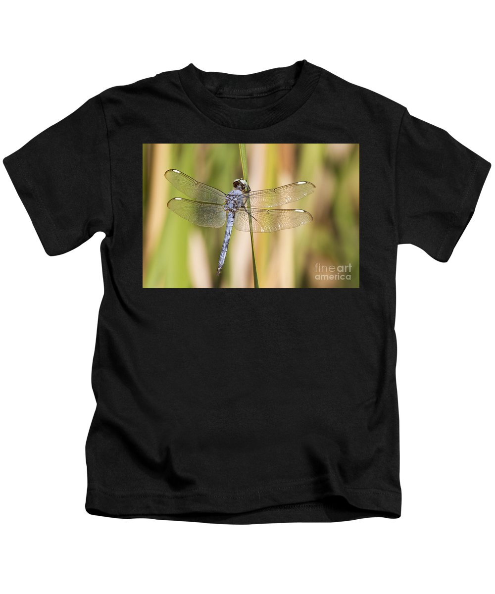 Dragonfly Kids T-Shirt featuring the photograph Hanging Out by Bryan Keil