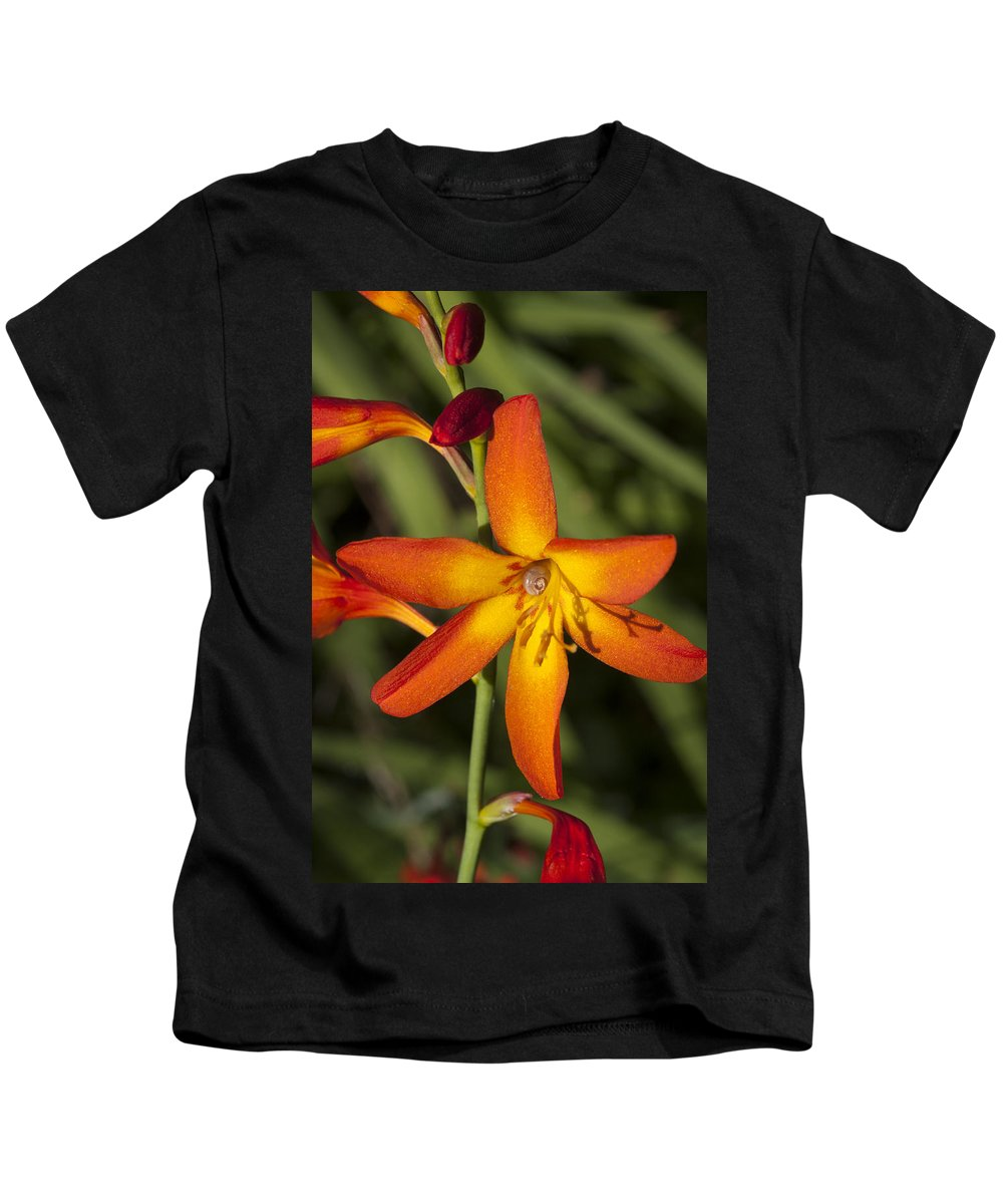 Flower Kids T-Shirt featuring the photograph Helical Desecration by Richard Thomas