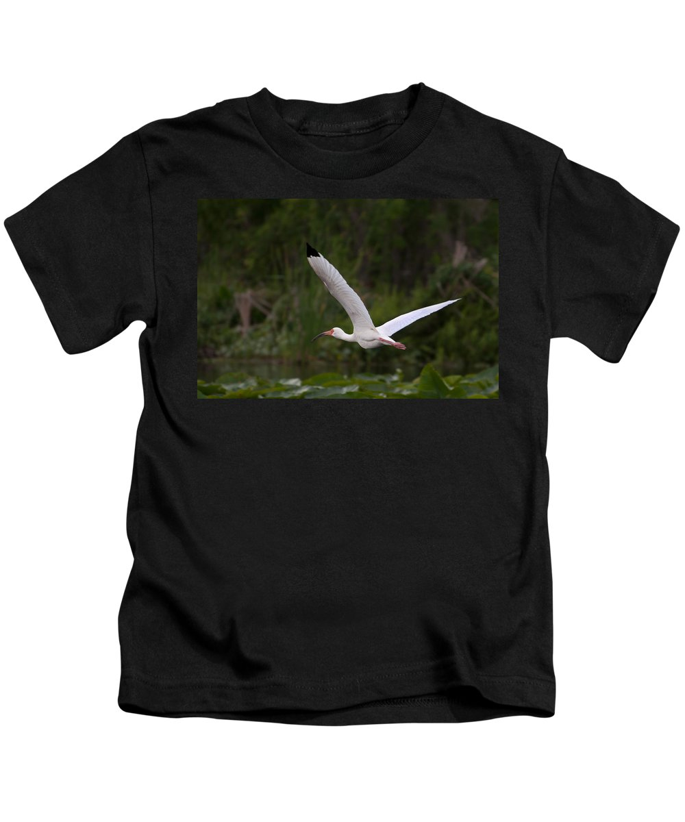 Ibis Kids T-Shirt featuring the photograph Ibis In Flight by Photos By Cassandra