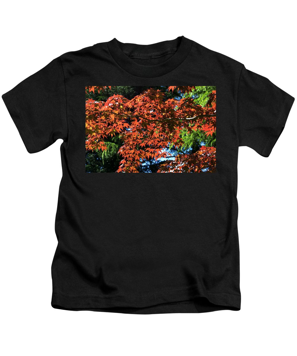 Japanese Maple Kids T-Shirt featuring the photograph Japanese Maple Canopy by Chris Day