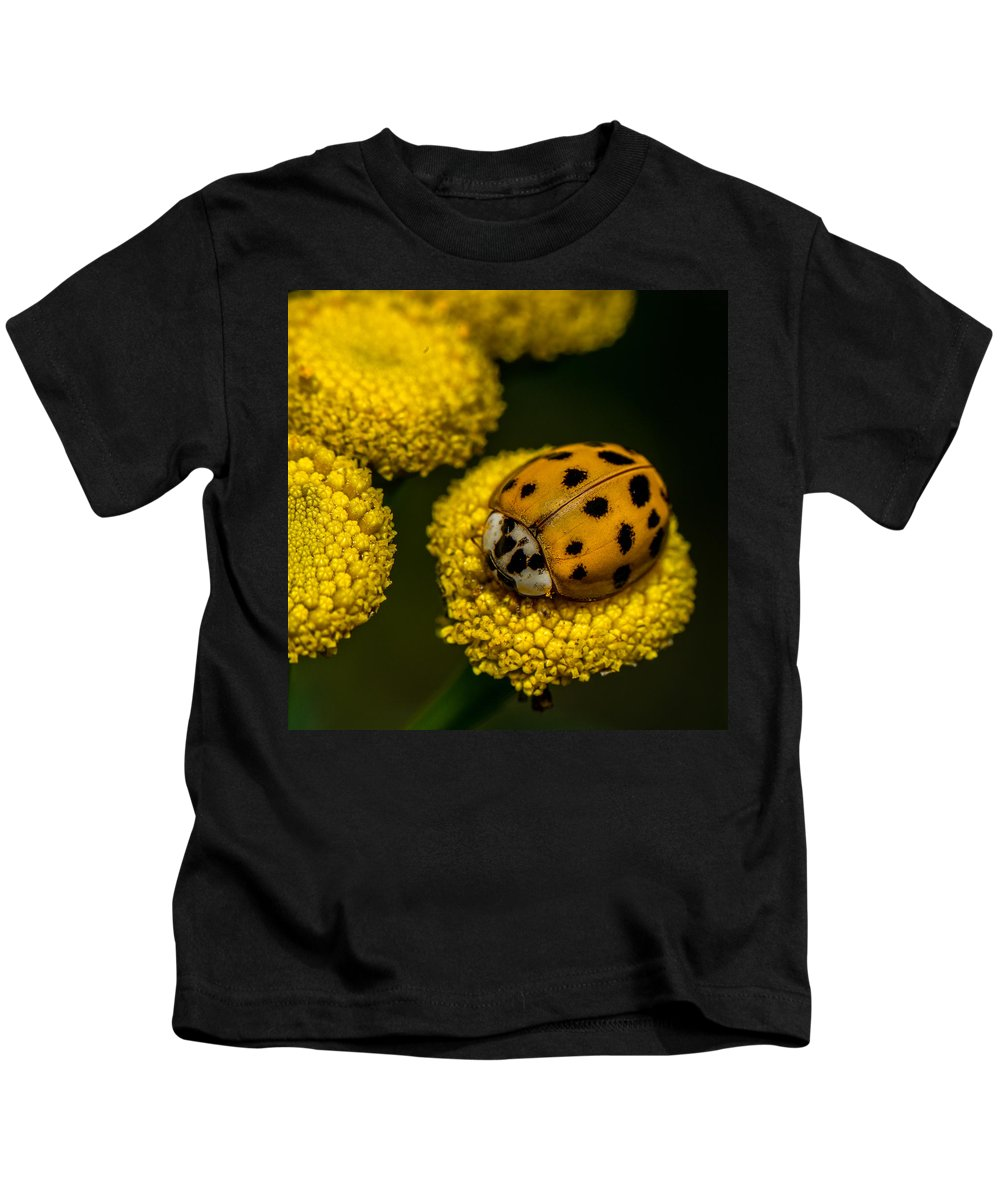Beetle Kids T-Shirt featuring the photograph Lady Bug by Paul Freidlund