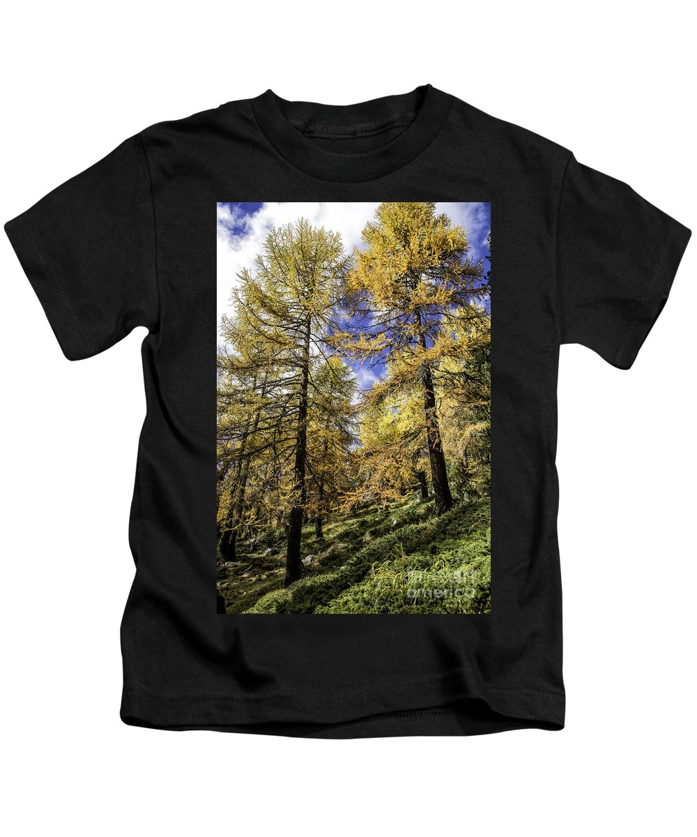 Pontresina Kids T-Shirt featuring the photograph Larch Pines by Timothy Hacker