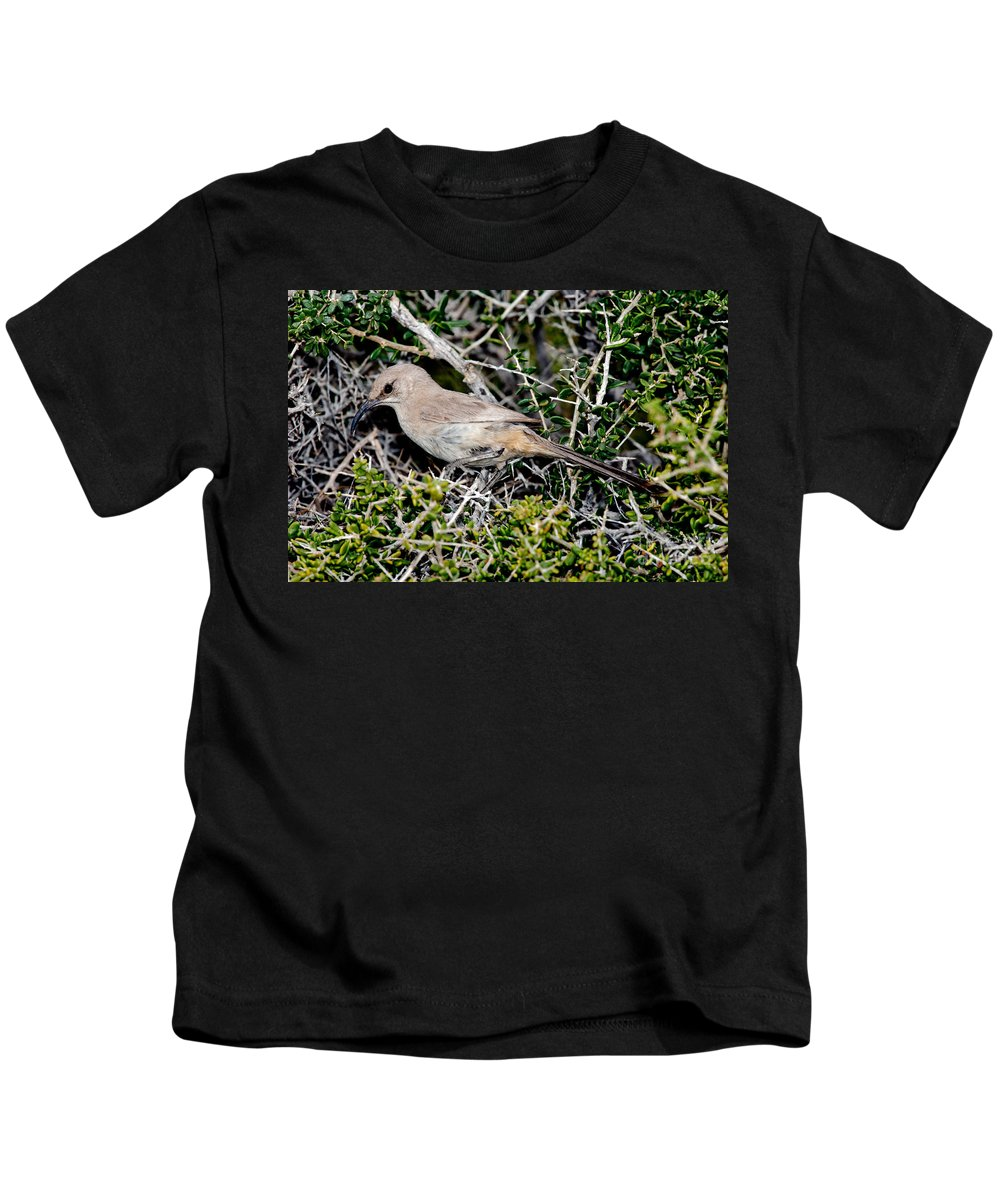 Animal Kids T-Shirt featuring the photograph Lecontes Thrasher In Bush by Anthony Mercieca