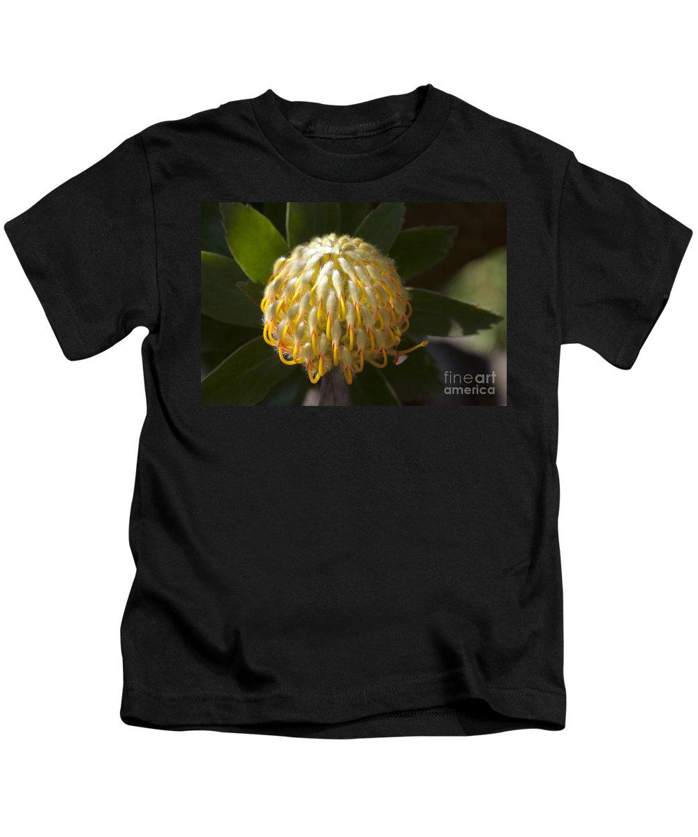Aloha Kids T-Shirt featuring the photograph Leucospermum -  Yellow Pincushion Protea by Sharon Mau