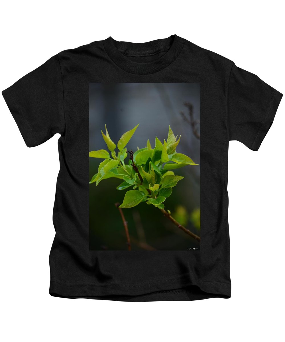 Lilac Leaves Kids T-Shirt featuring the photograph Lilac Leaves by Maria Urso