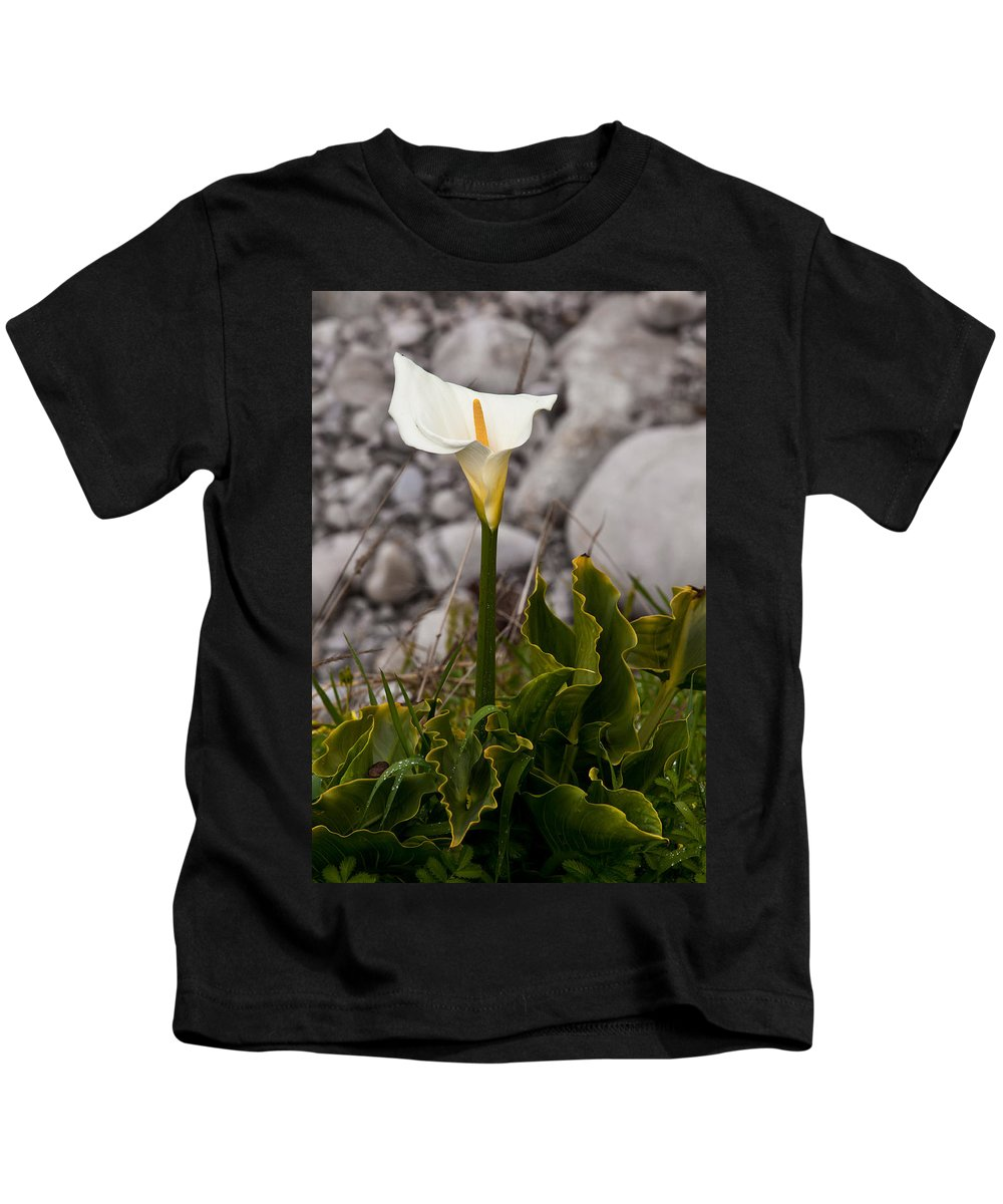 White Flower Kids T-Shirt featuring the photograph Lone Calla Lily by Melinda Ledsome