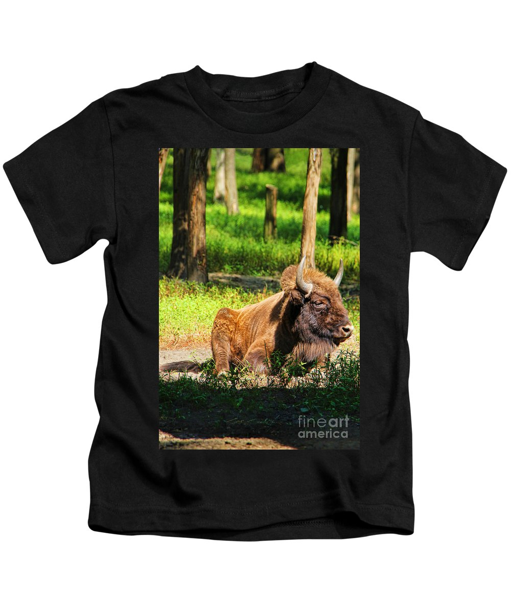 Polish Bison Kids T-Shirt featuring the photograph Majestic Bison by Mariola Bitner