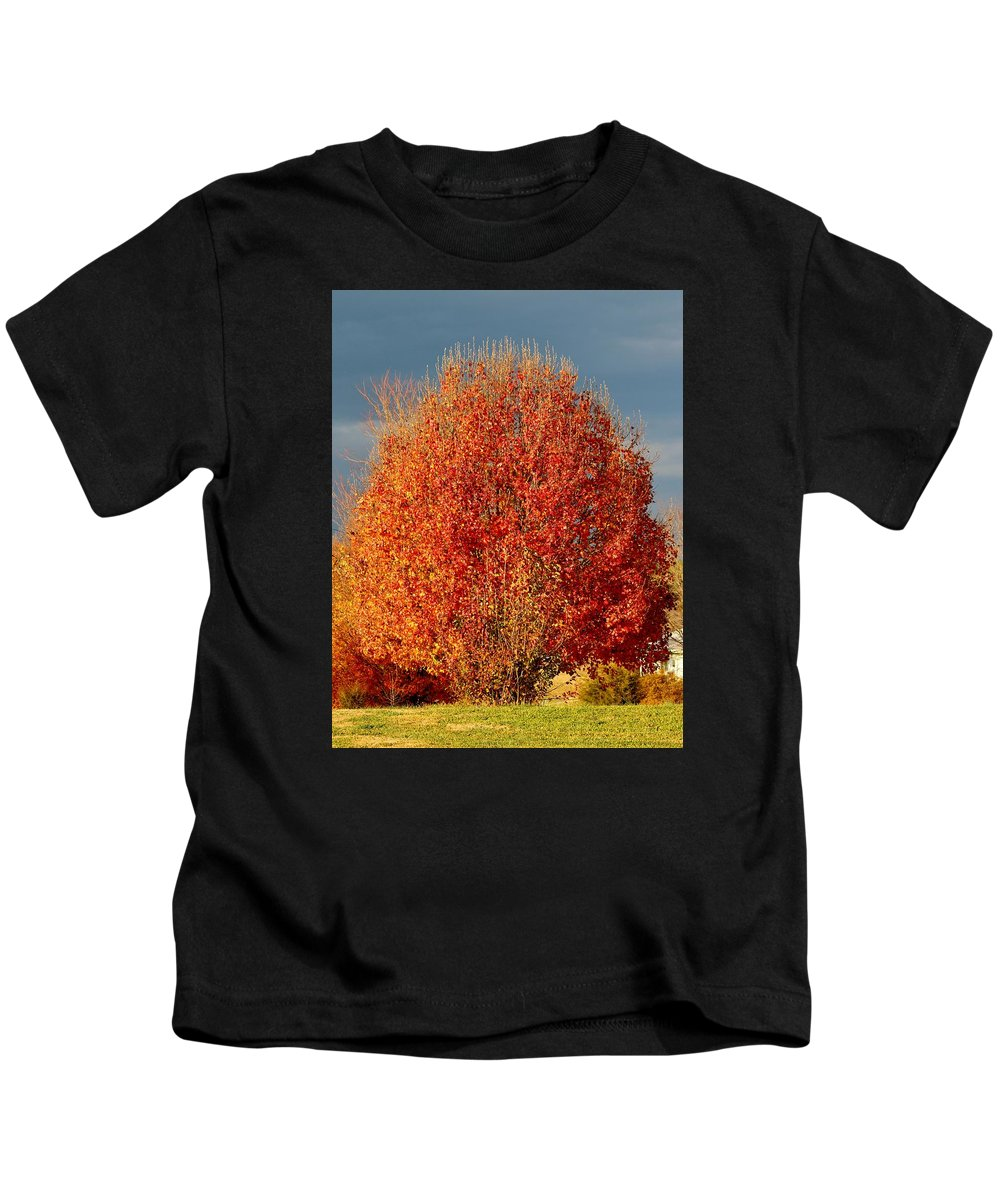 Tree Kids T-Shirt featuring the photograph Maple Tree by Cynthia Guinn