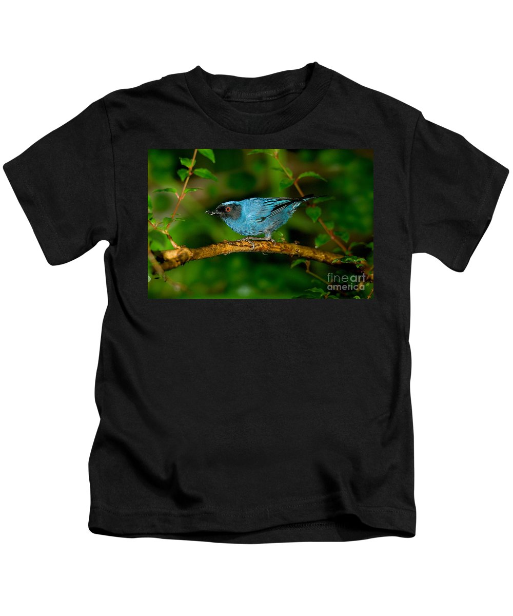 Fauna Kids T-Shirt featuring the photograph Masked Flower-piercer by Anthony Mercieca