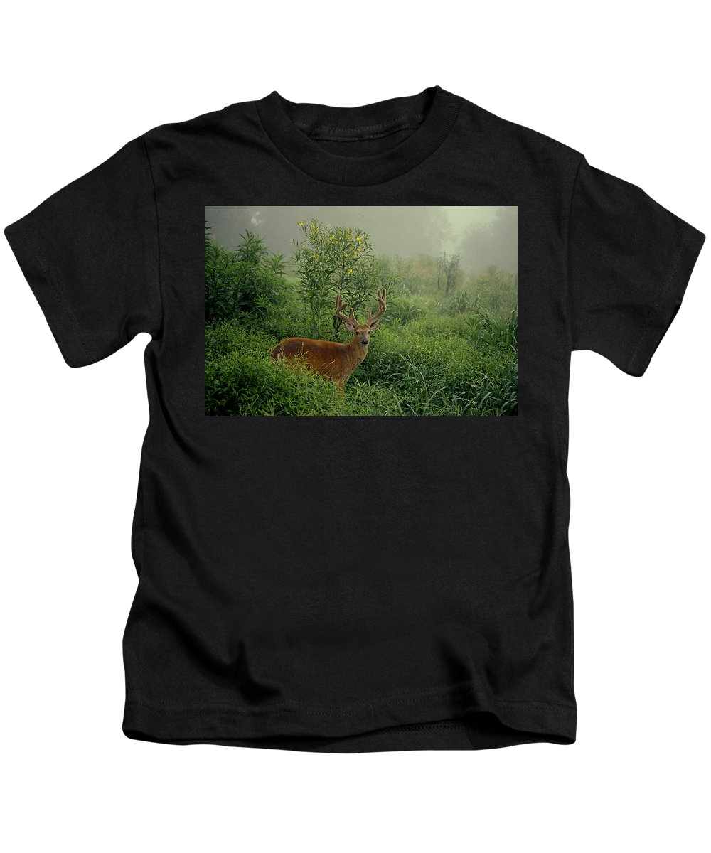 Deer Kids T-Shirt featuring the photograph Misty Morning Deer by Eric Albright