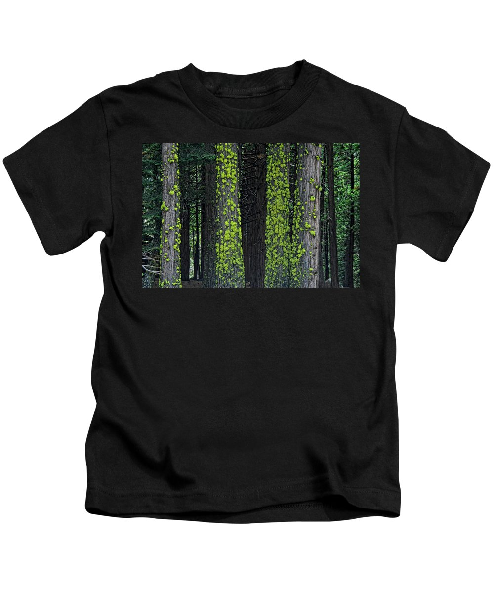 Tree Kids T-Shirt featuring the photograph Mossy Sentinels by Donna Blackhall