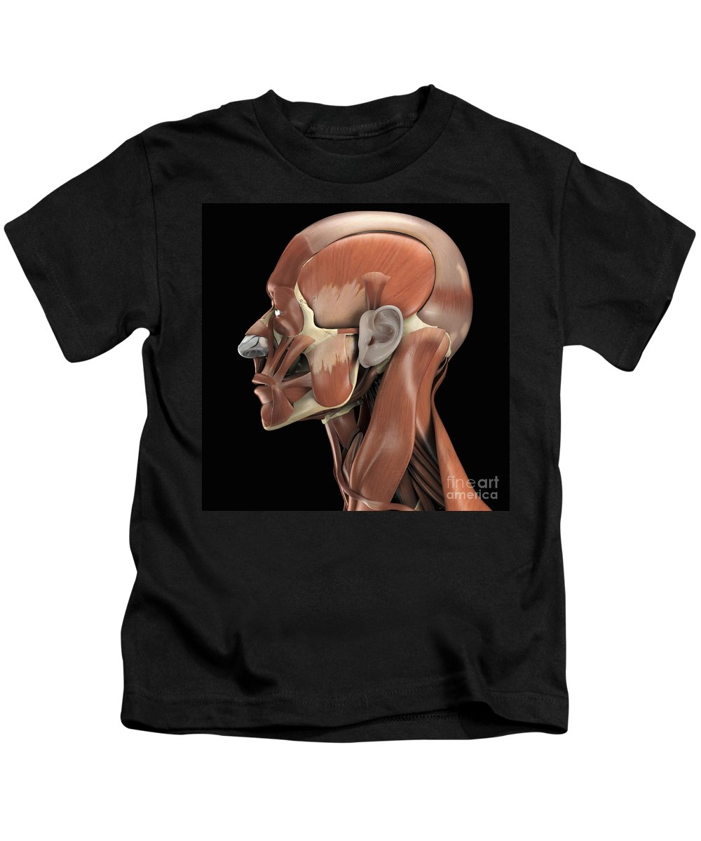 Muscular System Kids T-Shirt featuring the photograph Muscles Of The Head by Science Picture Co