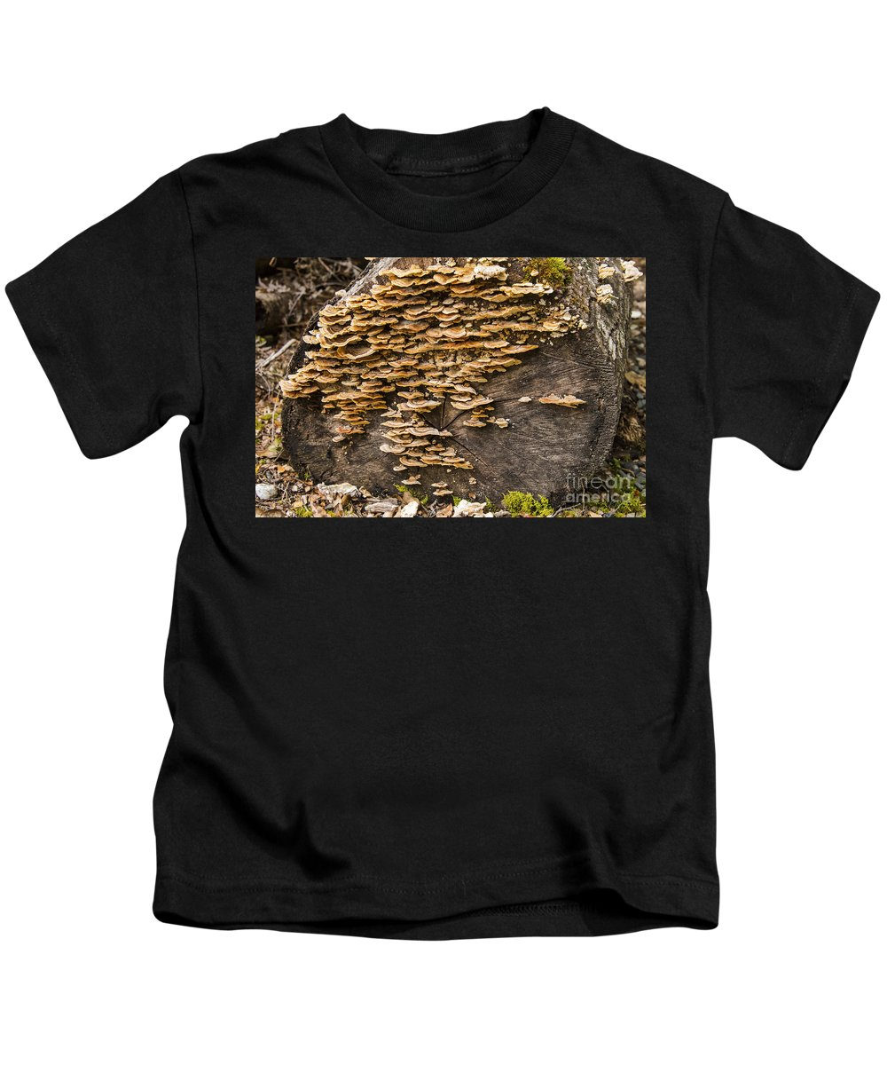 Lake Te Anau New Zealand Mushroom Mushrooms Log Logs Rainforest Rainforests Odds And Ends Kids T-Shirt featuring the photograph Mushroom Log by Bob Phillips