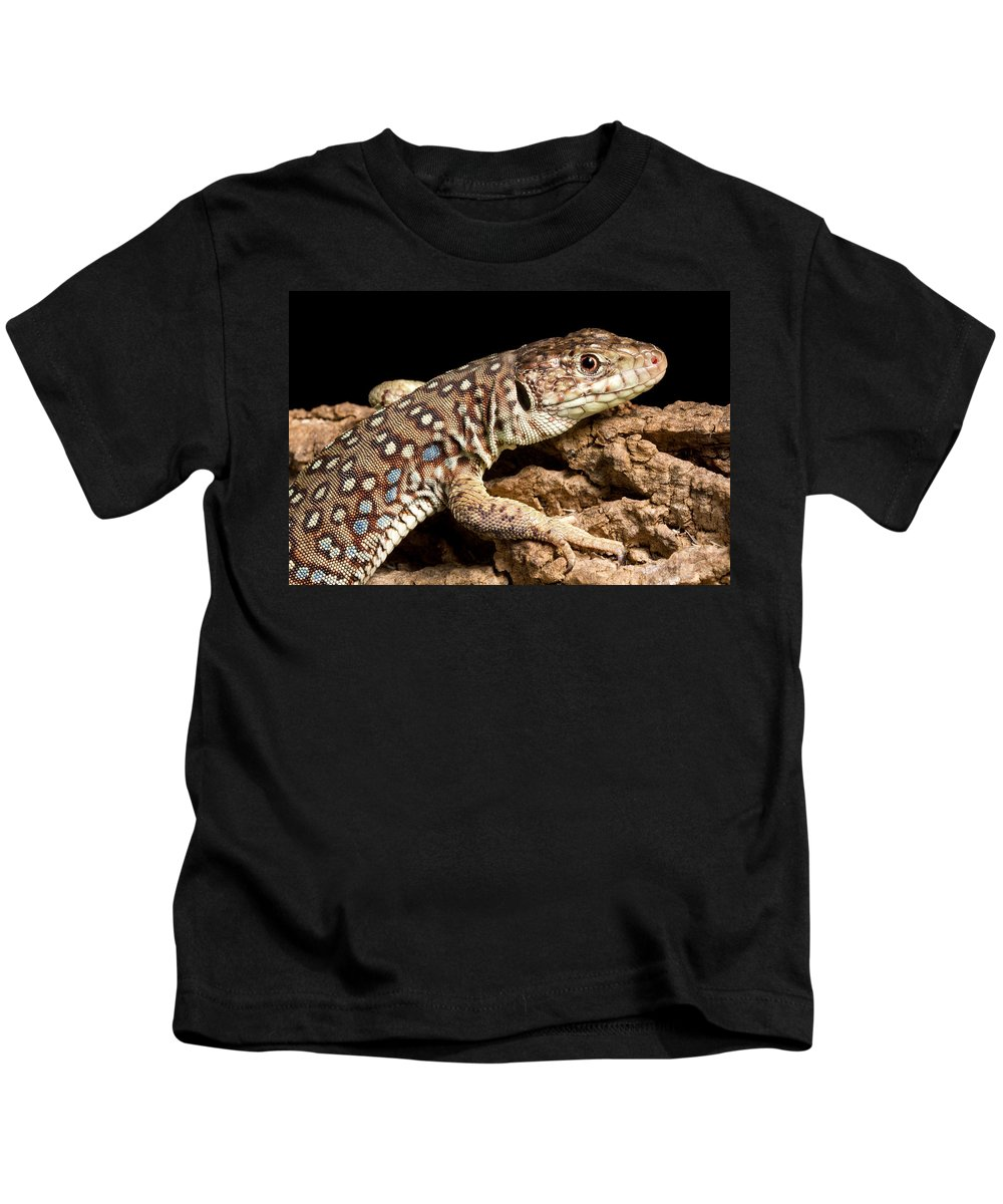 Ocellated Lizard Kids T-Shirt featuring the photograph Ocellated Lizard Timon Lepidus by David Kenny
