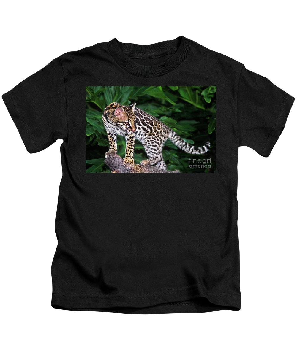 North America Kids T-Shirt featuring the photograph Ocelot Felis Pardalis Wildlife Rescue by Dave Welling